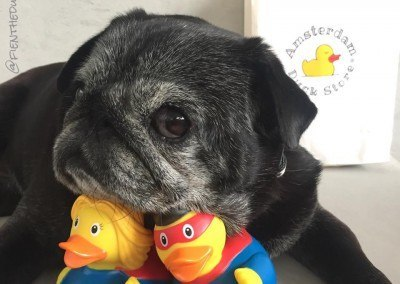Doggy & Ducky heroes